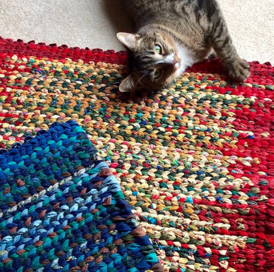 cat with twined rag rugs multicoloured and blue
