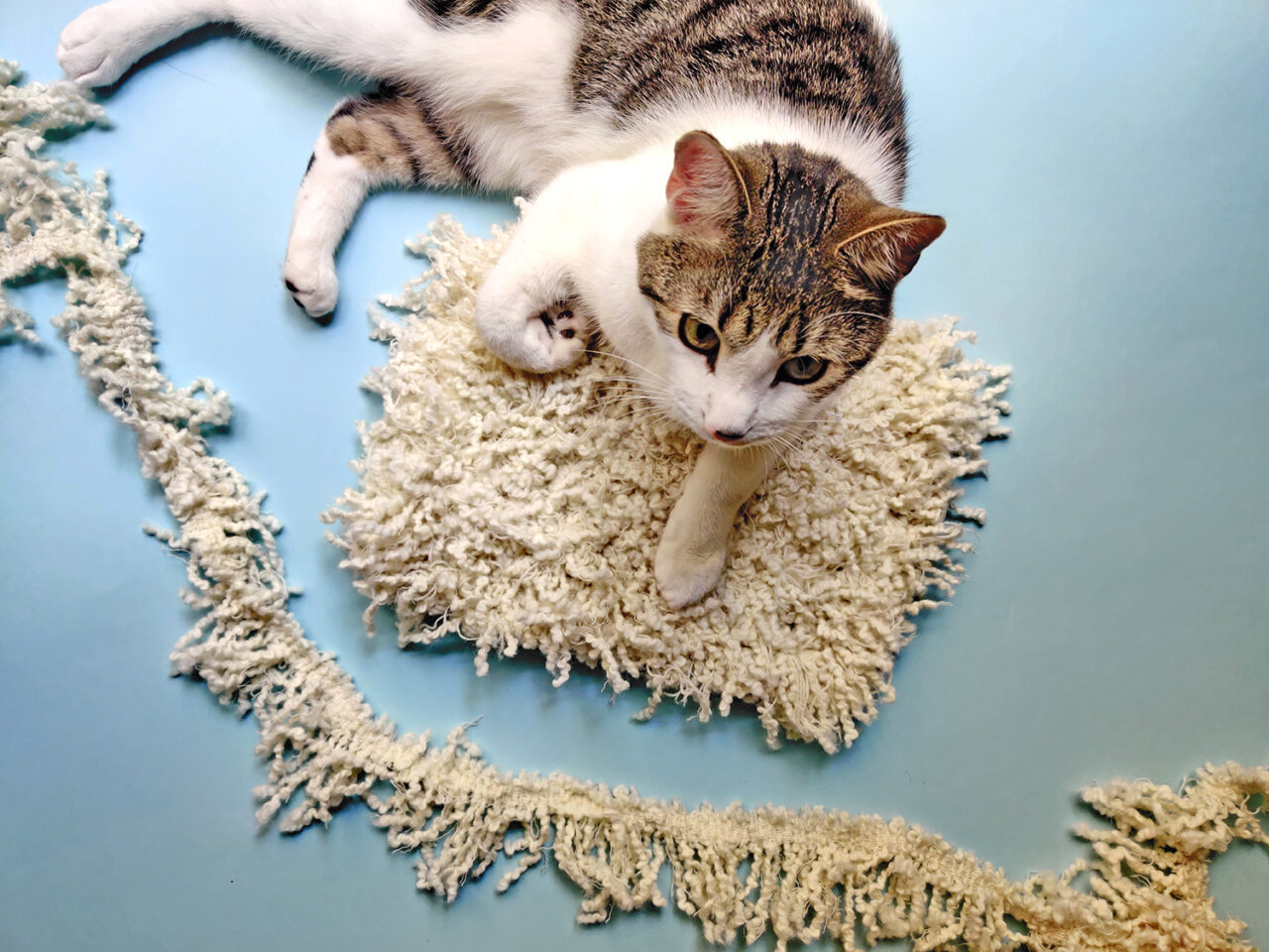 Cat with cream twined mat
